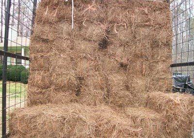 pine-straw